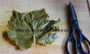 ساقه ی باقی مانده از برگ را با قیچی جدا میکنیم
